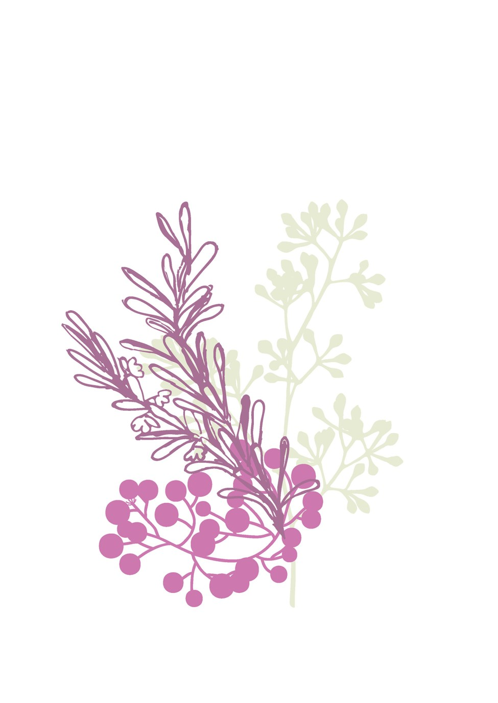 australian-flowers-illustration-04