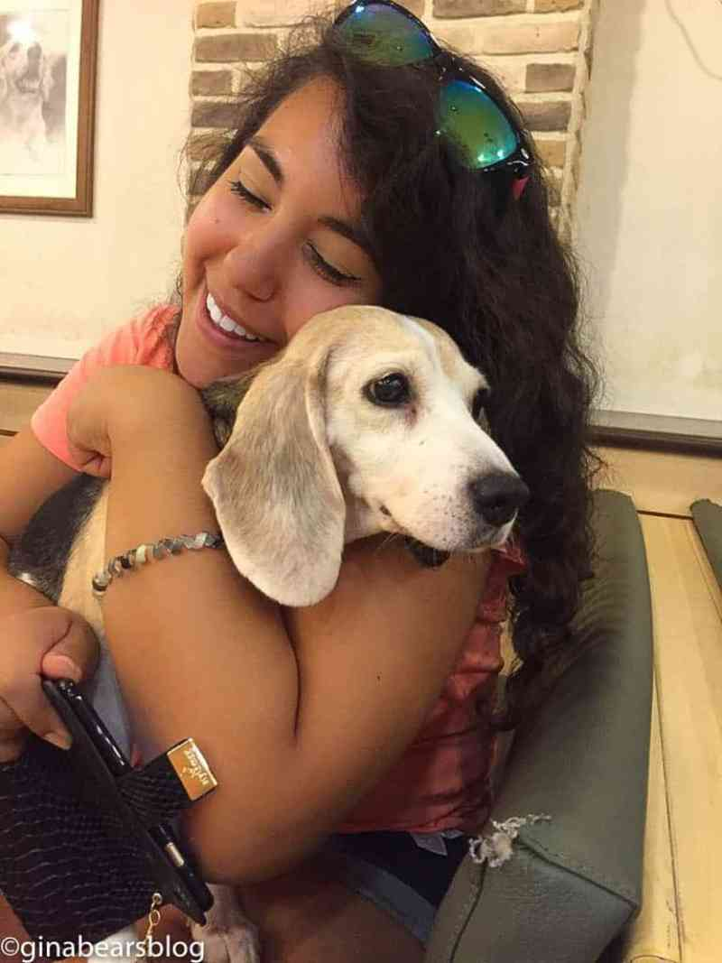 dog cafe experience at bau house