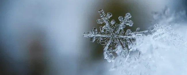 Learn about snowflakes and other winter learning opportunities