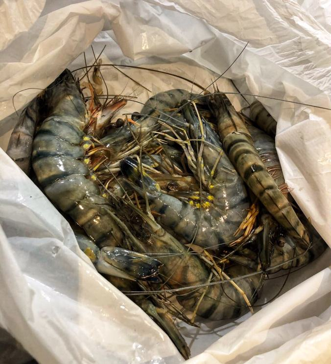 Tiger prawns uncooked, from Billingsgate Fish Market