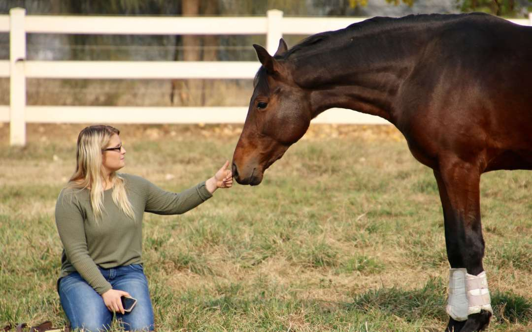 The Bond  ~ Horse Diaries of Uno ~