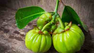 Photo of Garcinia Cambogia, works or… not at all?