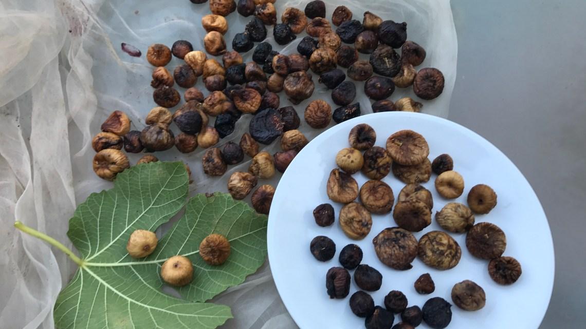 פירות יבשים – כיצד לייבש תאנים, ענבים ושזיפים?