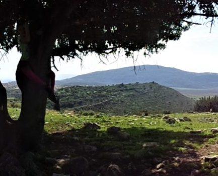 גינת עצי ארץ ישראל – לתת קצת עזרה לטבע