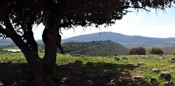 חידוש החורש המקומי – להשיב את עצי ארץ ישראל