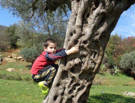 גיזום עצי פרי