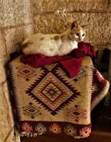 מתחם כנסית סנט גורג בדרך שכם-חתול