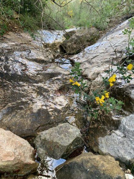 נחל עובדיה (מארס 2020) -זרימת מים ביובל האמצעי של הנחל