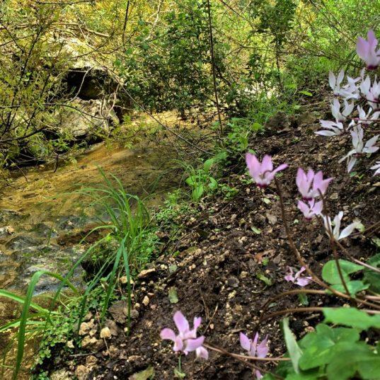 נחל עובדיה (מארס 2020) מים זורמים אחרי הגשמים בקטעים מהנחל.