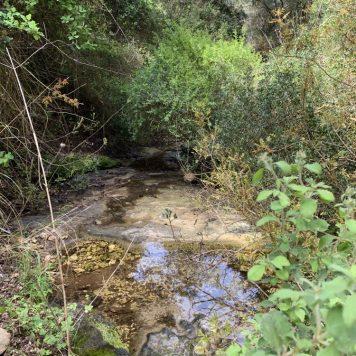 נחל עובדיה (מארס 2020) מים זורמים אחרי הגשמים בקטעים מהנחל. היובל הדרום מזרחי