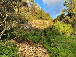 נחל עובדיה (מארס 2020) - מקום מפגש היובל הדרום מזרחי עם היובל האמצעי של הנחל. מימין הגבעה של שכונת דניה.