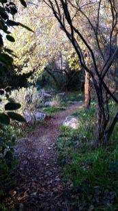 הגן של עתי