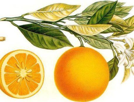 ליקר תפוזים – מיץ תפוזים למתקדמים