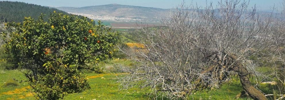 על יחורים וריבוי עצים – איך מקימים בוסתן עצי פרי מקומיים?