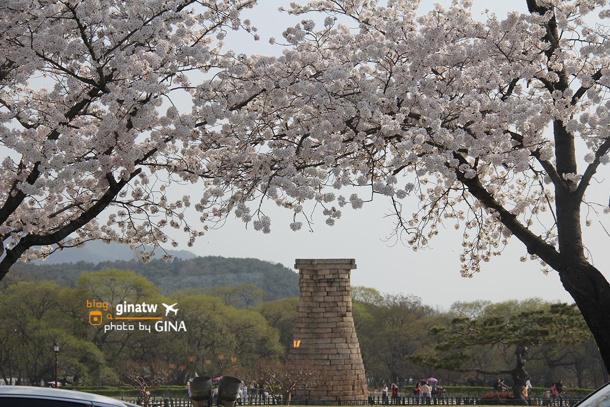 韓國慶州賞櫻》慶州整個城市都是櫻花大道美到不行!推薦韓國賞櫻必來!!