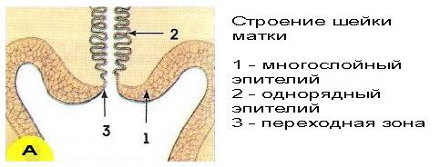 descărcare maro cu o varicoză pelviană mică)