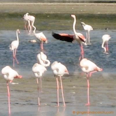 Ras Al Khor Wildlife Sanctuary – Take Two