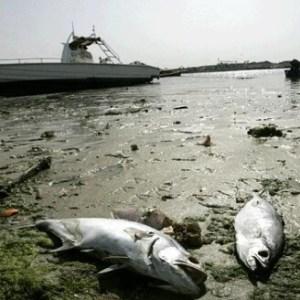 dead fish in Dubai