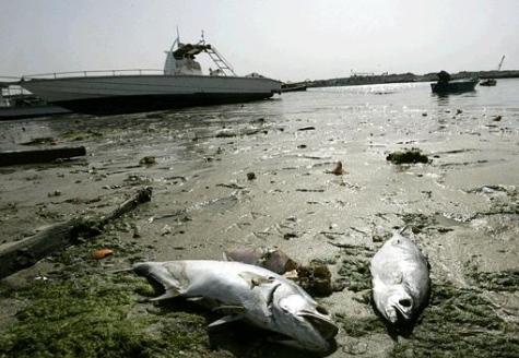 gulf news dead-fish