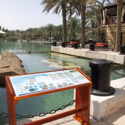 Burj Al Arab – Turtle Rehab Center
