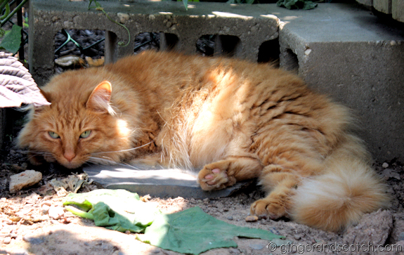 Our house cat sunning in the garden