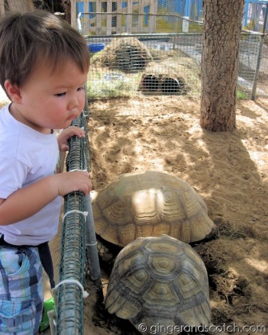 Wee Scotch with the tortoises