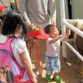 Petting the horses