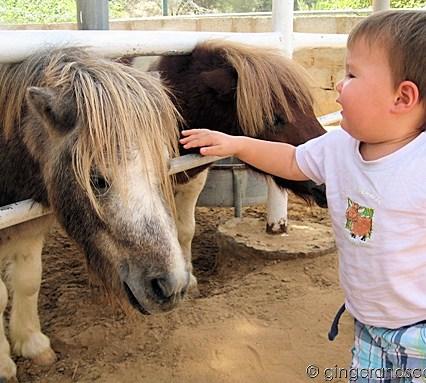 Petting more horses