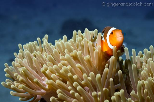 Koh Lanta Scuba Diving