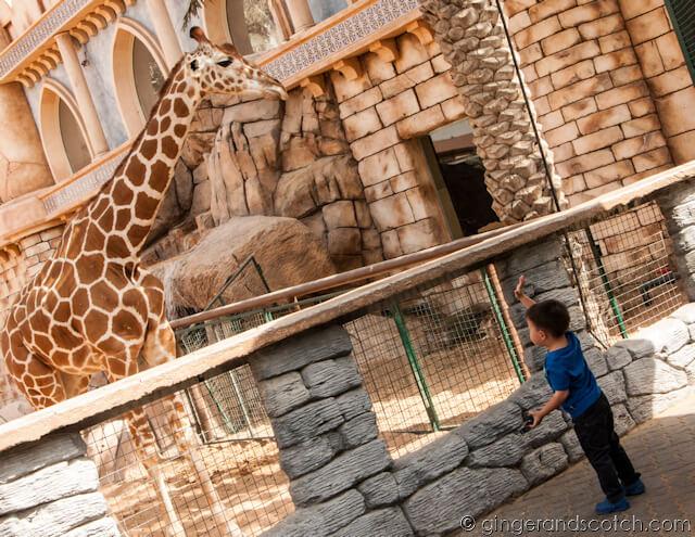 Giraffe Exhibit