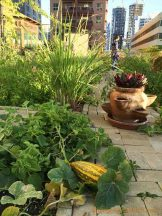 Volunteer Community Garden in Tecom, Dubai