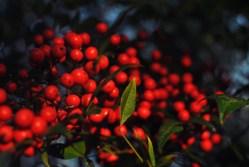 berry-macro