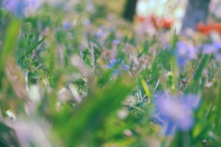 flowergrass