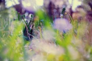 flowergrass2