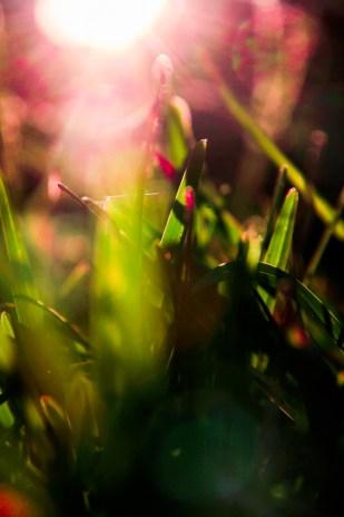 october-grass-11