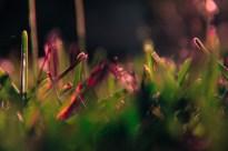 october-grass-5