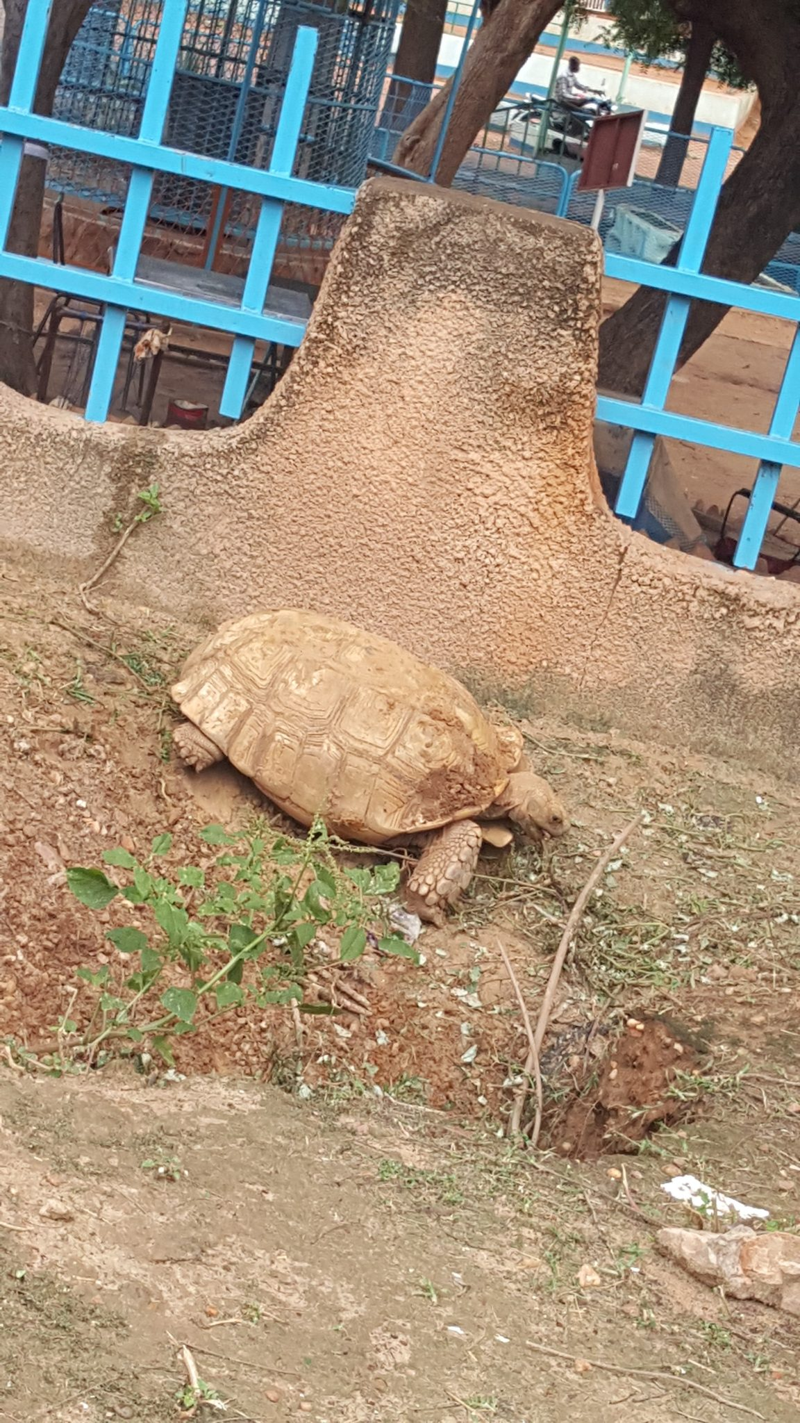 A tortoise at the zoo