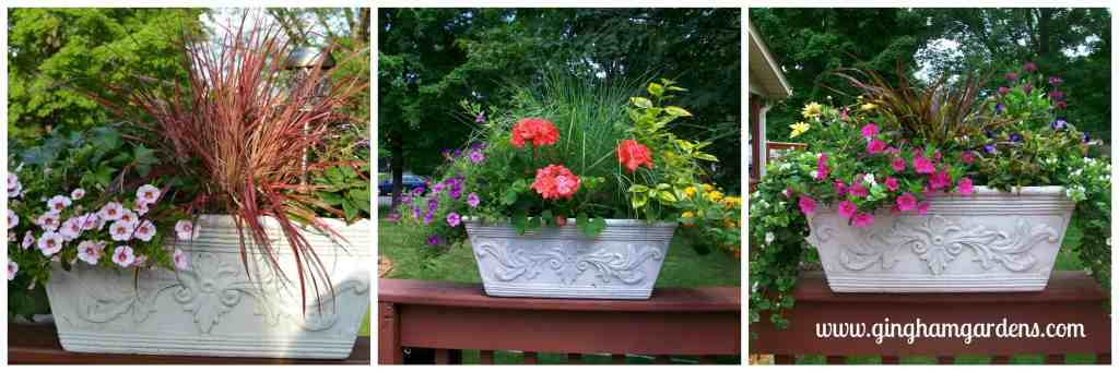 Container gardening with specialty annuals.