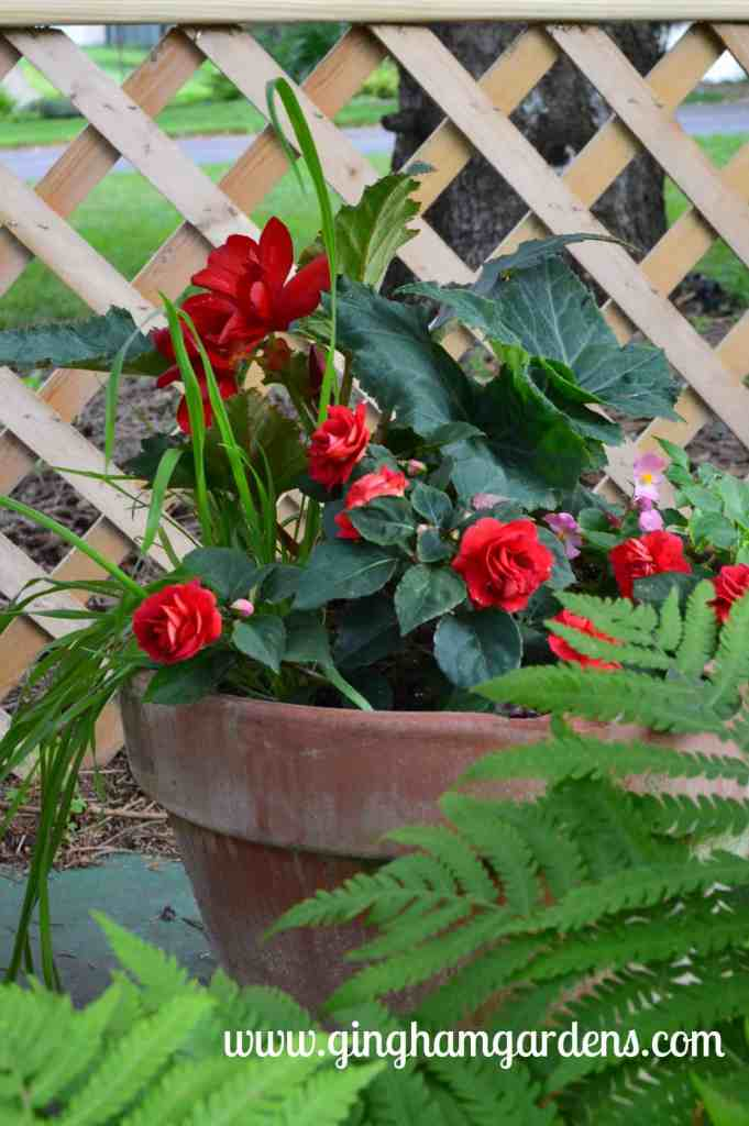 Creative Flower Container Gardening - Red Impatiens and Begonias in a Clay Pot