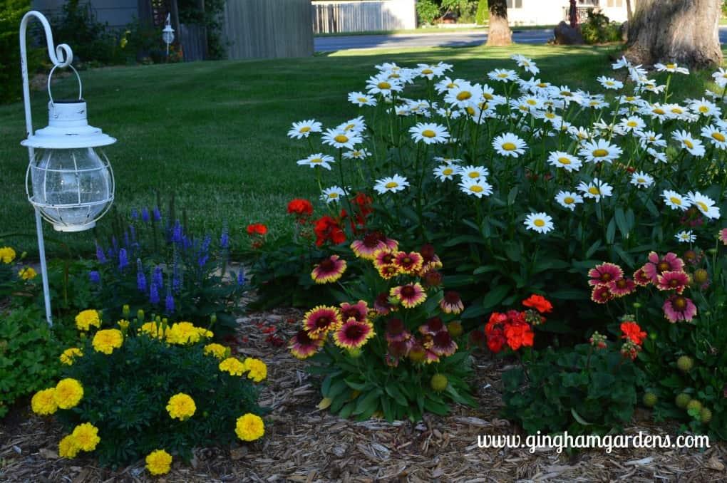 Garden at Gingham Gardens