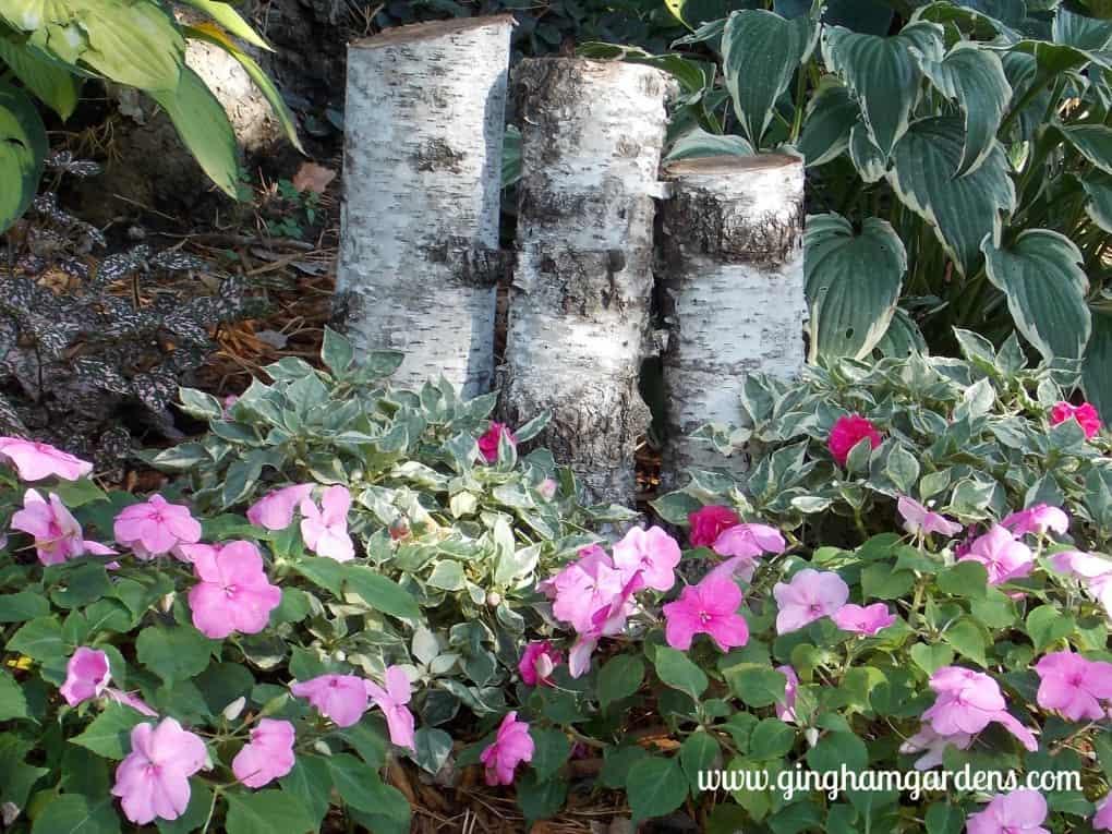 Varigated leaf impatiens at Gingham Gardens