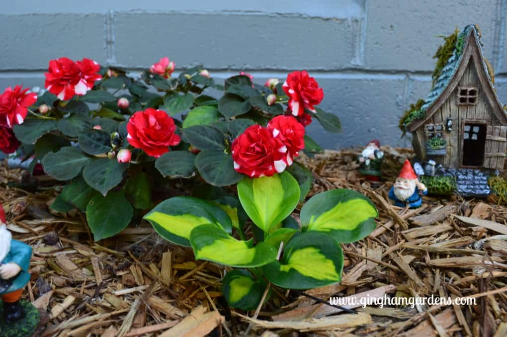 Miniature Gnome Fairy Garden in the Shade - Miniature Hosta