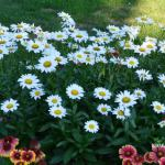 Gardening Recap – 2017 Best Perennials