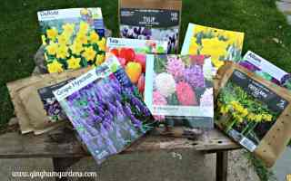 Fall Gardening – Planting Bulbs for Amazing Spring Flowers