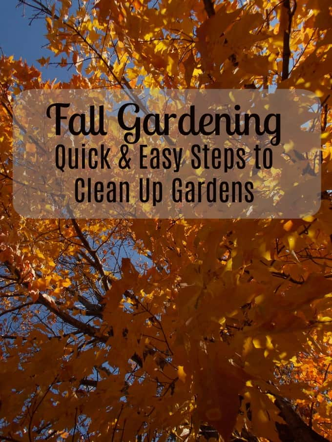fall gardening - quick and easy steps to clean up gardens