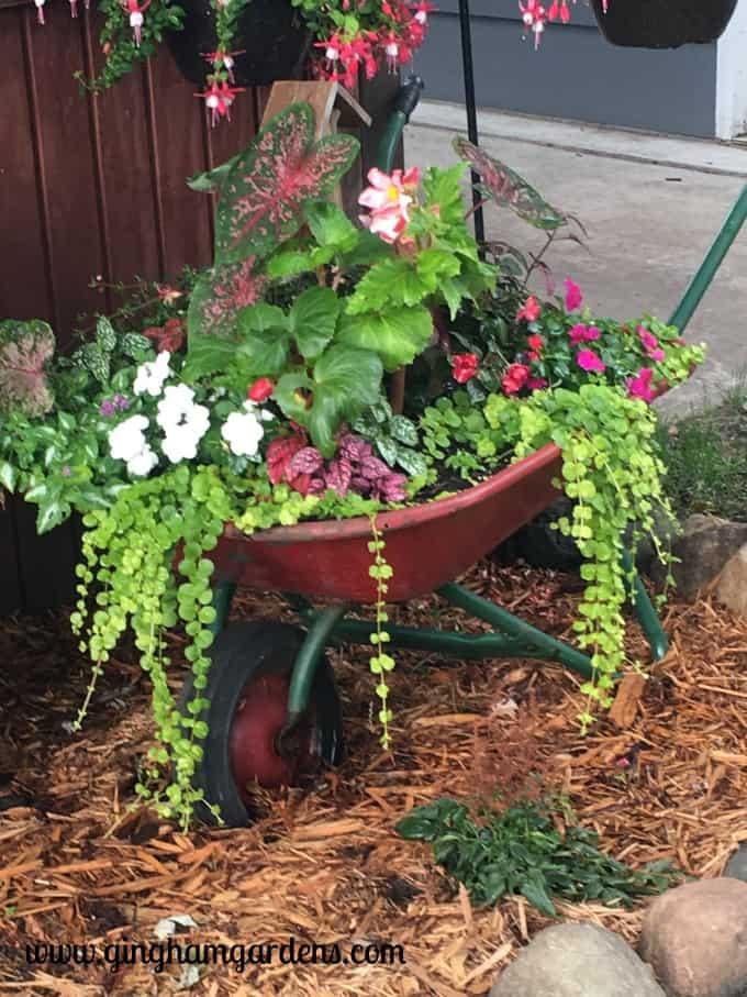 Gardening Recap - Wheelbarrow