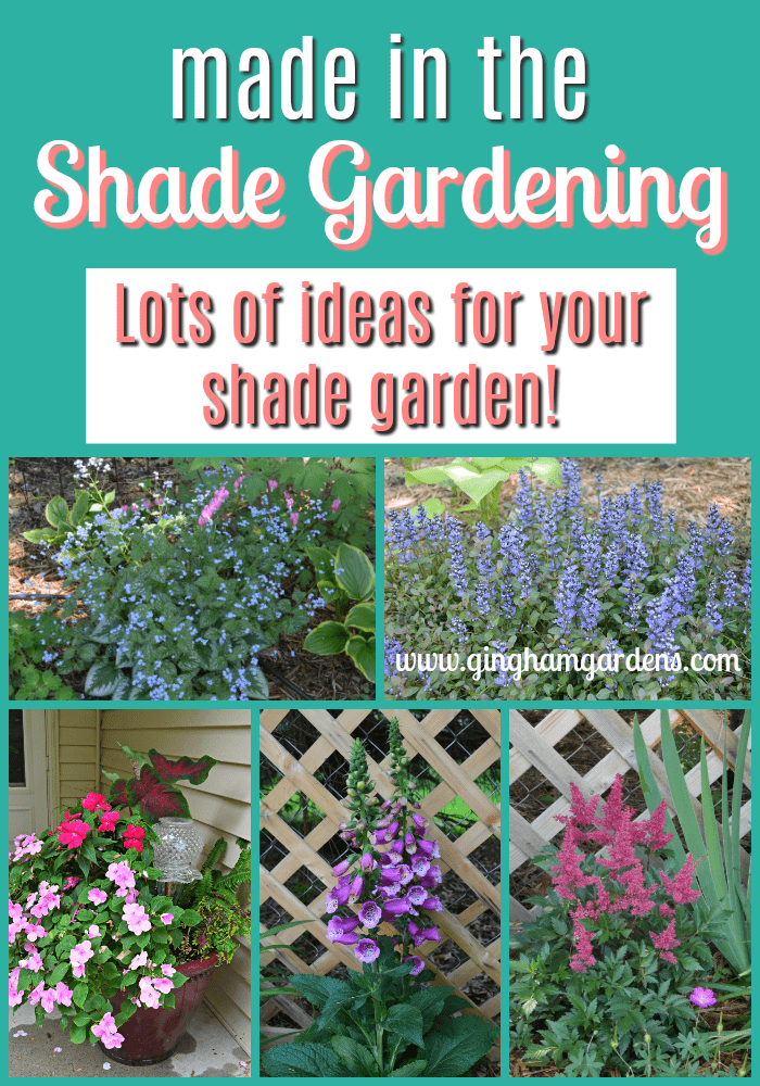 Made In The Shade Gardens - Gingham Gardens