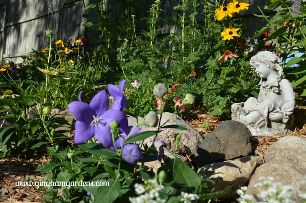 And Another Picture Of The Same Bed, Featuring An Array Of Perennials  (Zagreb Coreopsis, Black Eyed Susans, Yarrow, Balloon Flower) And Annuals  (nicotiana ...