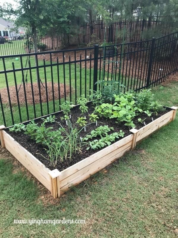 Raised Vegetable Garden 101