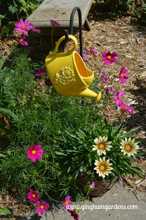 Watering Can with Cosmos and Gazanias